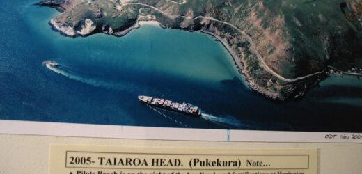 Profiter des meilleures attractions de la péninsule d'Otago en Nouvelle-Zélande